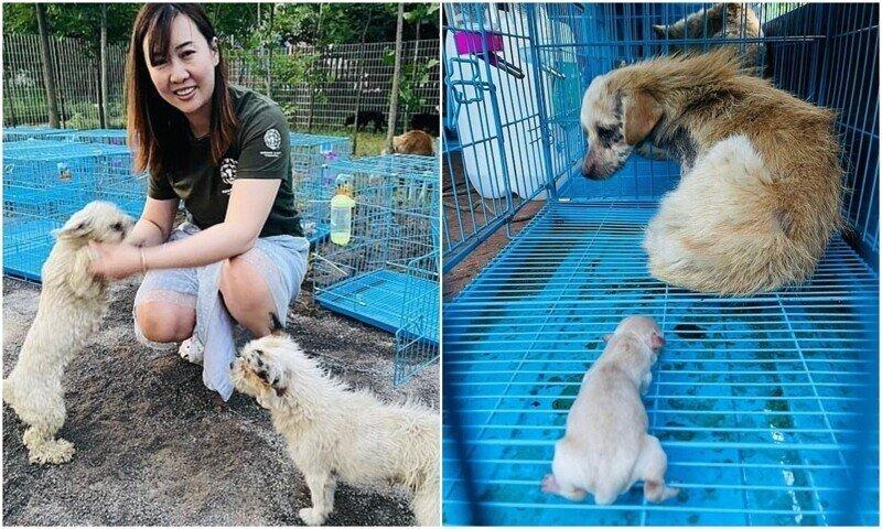В Китае десятки собак спасли с фестиваля собачьего мяса