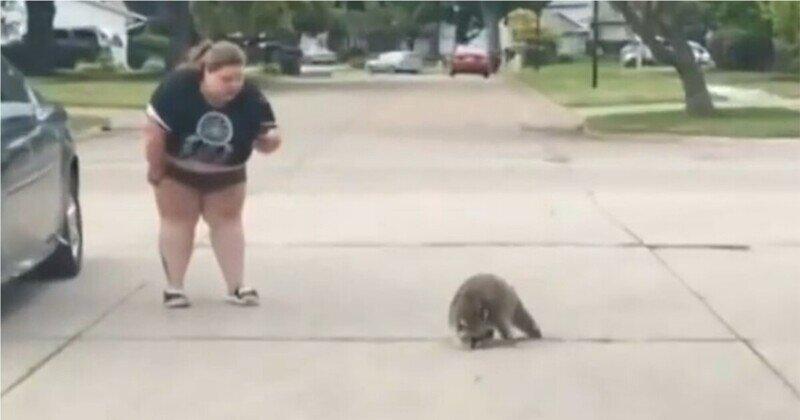 Забавный побег тучной девушки от енота