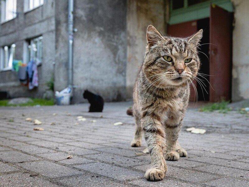 Такие классные дворовые коты!