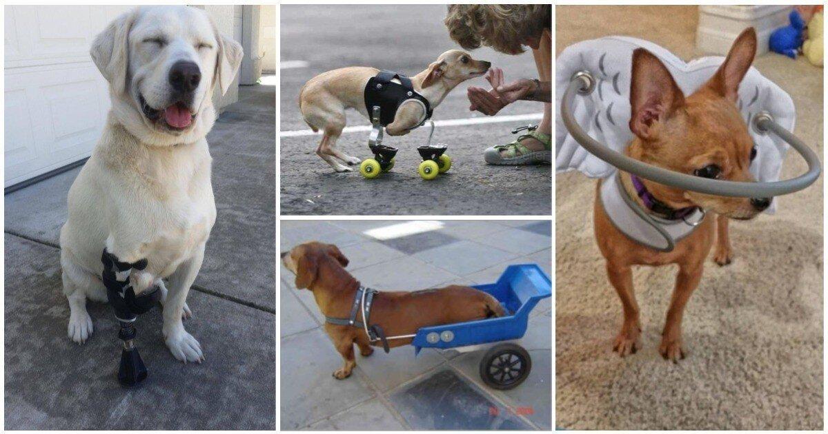 Доброта всегда рядом: 23 приспособления для собак-инвалидов