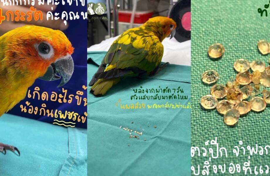 Поклевал на миллион: попугай проглотил бриллианты хозяйки