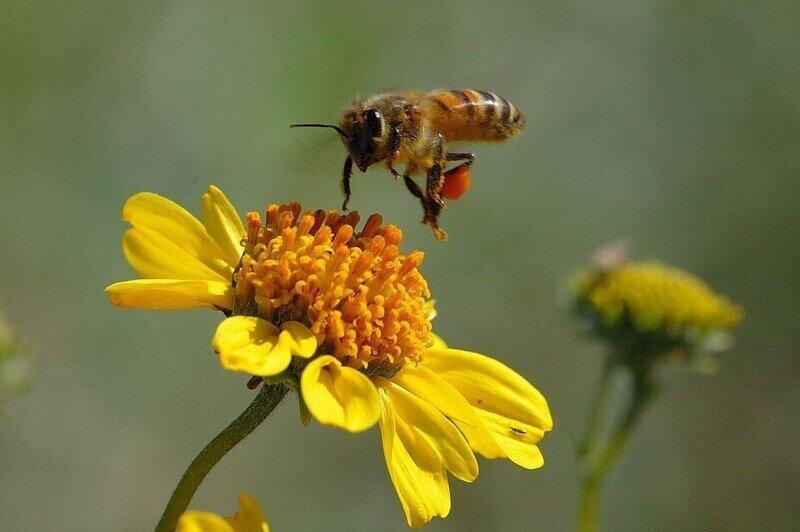 В Подмосковье предупредили о пьяных пчелах