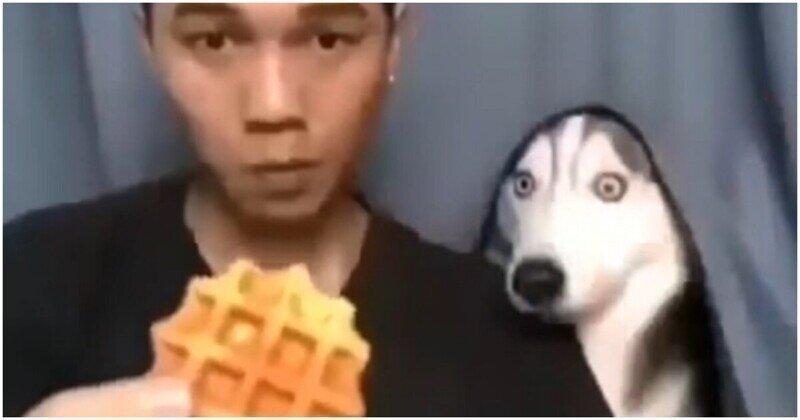 Забавная реакция собаки на фокус хозяина