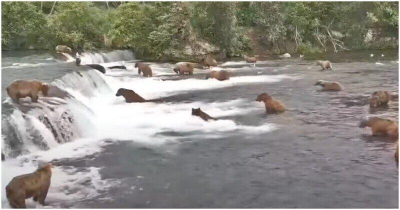 """Медведи устроили себе """"пляжную вечеринку"""""""