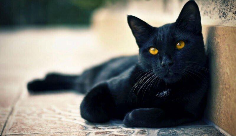 Популярные суеверия и их происхождение