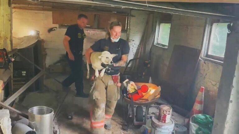 Пожарные спасли собаку, застрявшую между бетонными стенами