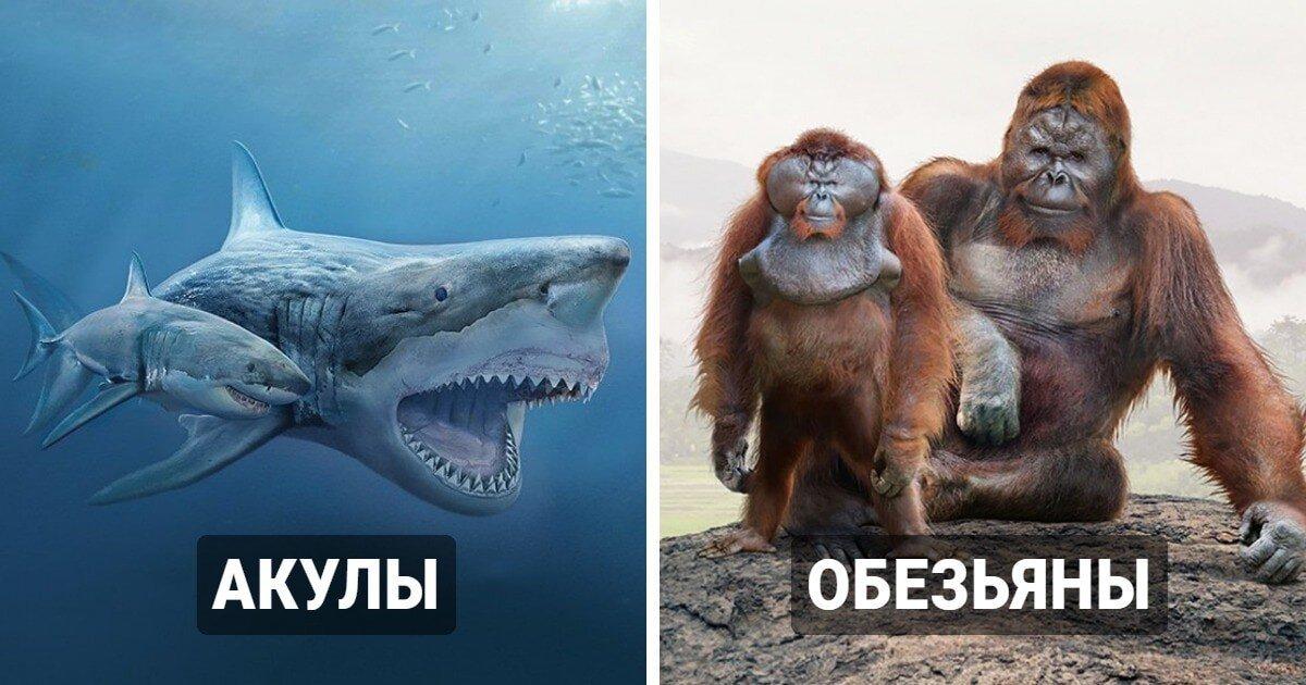 Наглядные сравнения животных настоящего и их вымерших сородичей из прошлых веков