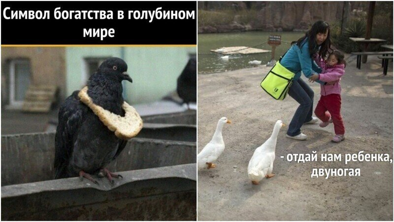 Умора: подборка забавных фото и мемов с птицами