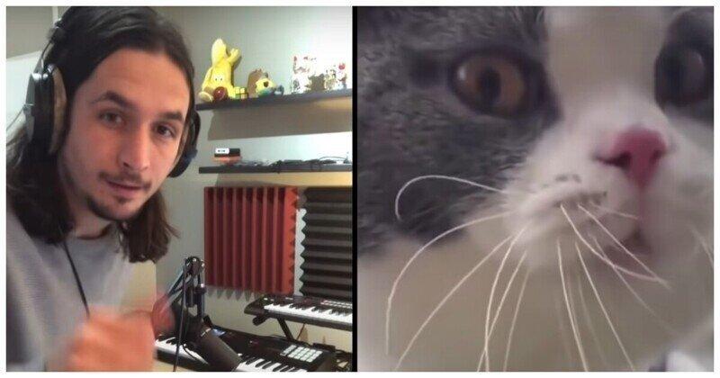 Музыкант The Kiffness создал новый музыкальный шедевр с мяукающим котом
