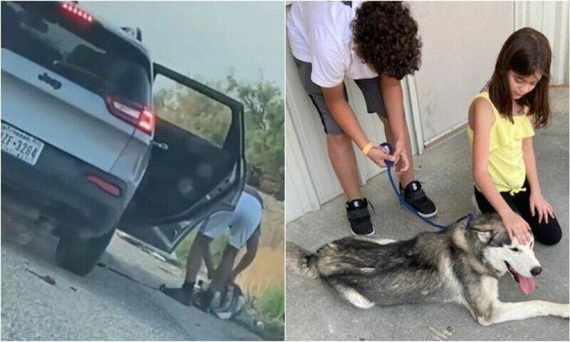 В Техасе арестовали мужчину, который бросил хаски на дороге