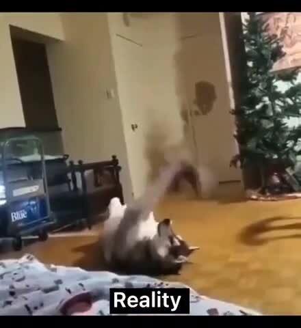 Собака породы хаски - ожидание и реальность