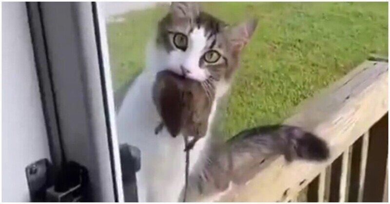 Хозяйка, открывай! Кошка вернулась домой с трофеем