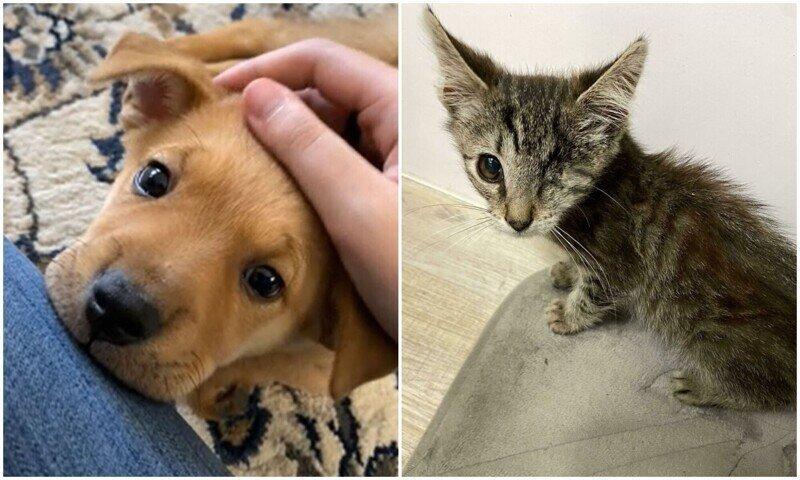 20+ трогательных фото животных, которым подарили новую жизнь