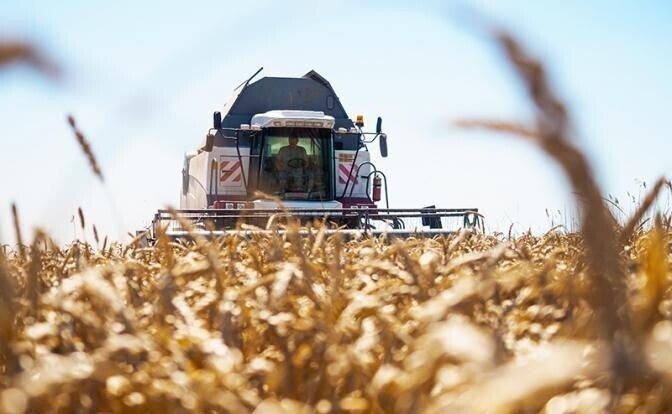 «Нас ждет дефицит зерна и рост цен на хлеб»?