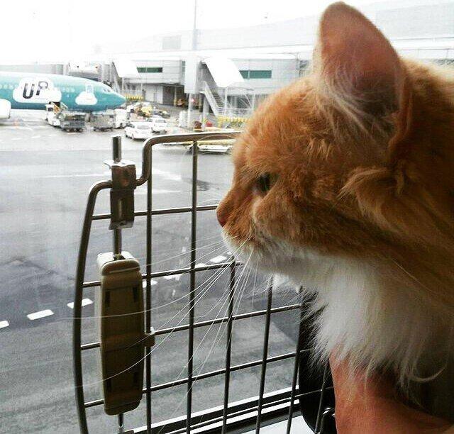 О котовской доле в США. Из рассказа кота-эмигранта