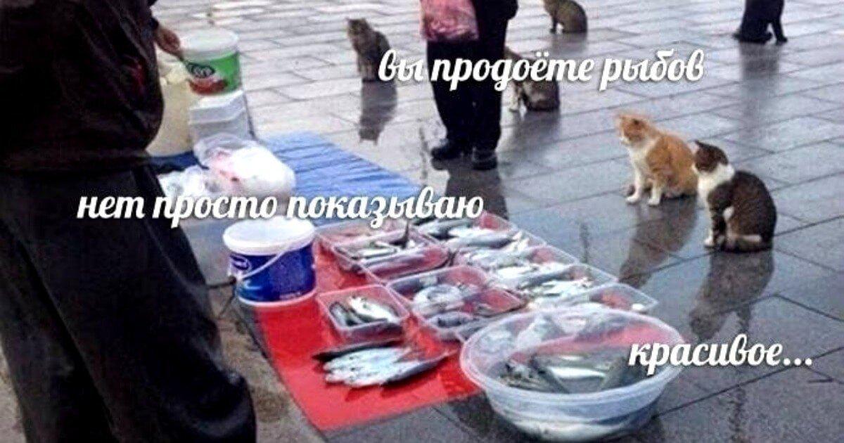 Вы продоёте рыбов?»: что за мем с котами и рыбой, на котором все разговаривают с ошибками