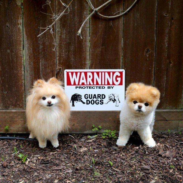 Опаснейшие звери за табличкой-Осторожно, злая собака