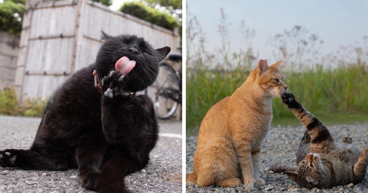 Очаровательные уличные котейки
