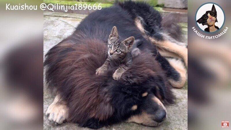 Любовь зла - полюбишь и кота