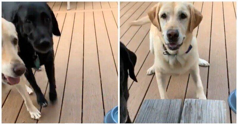 Собаки научились радоваться мелочам