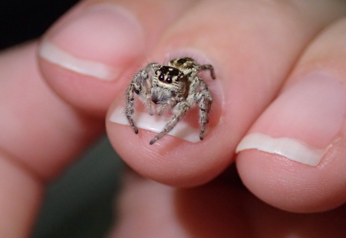 3 вида «домашних пауков», которые реально полезны в доме. Защищают от насекомых и не несут вреда людям
