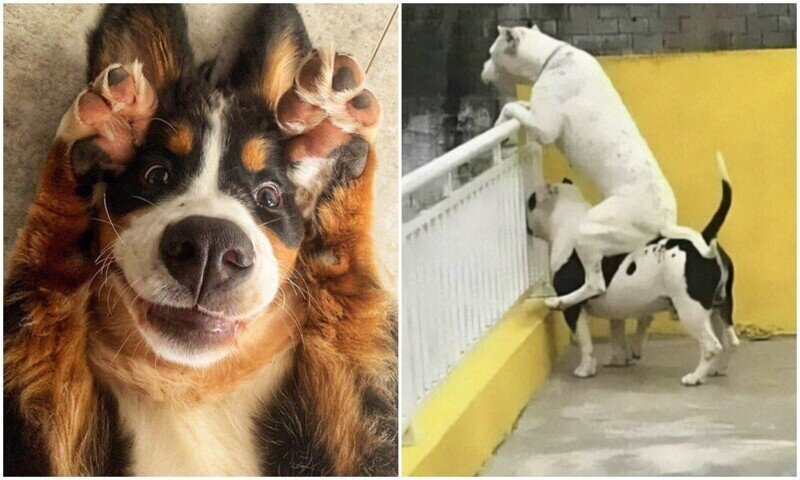 Какие же дурашки: 20+ смешных фото собак для настроения