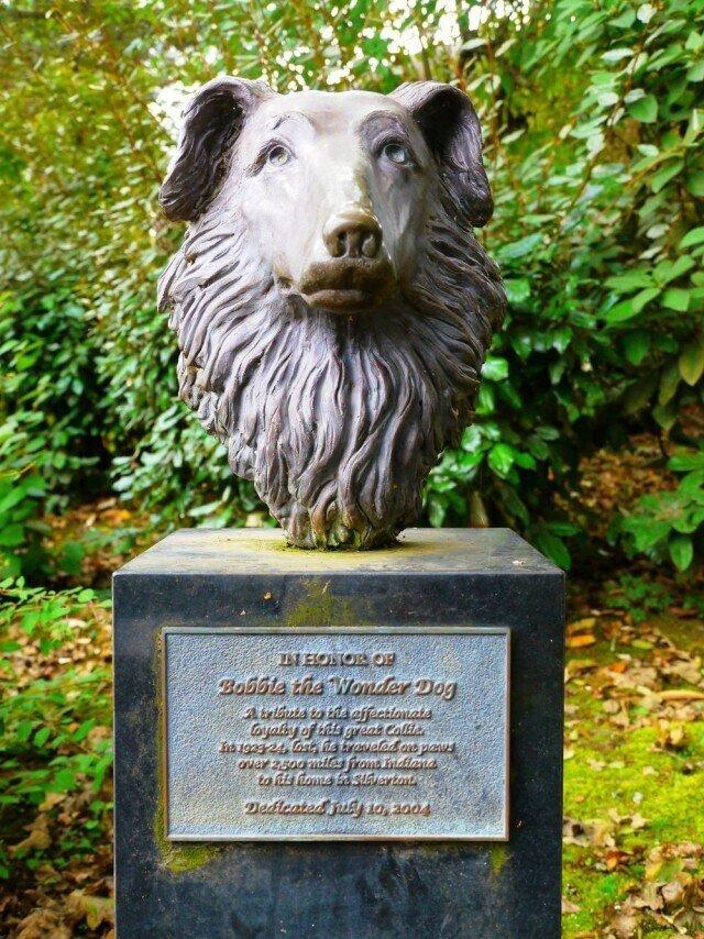 Чудо-пёс Бобби, который преодолел 4000 км, чтобы вернуться домой