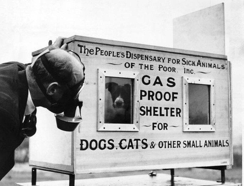 «Британская резня питомцев»: зачем люди добровольно убили 750 тысяч кошек и собак