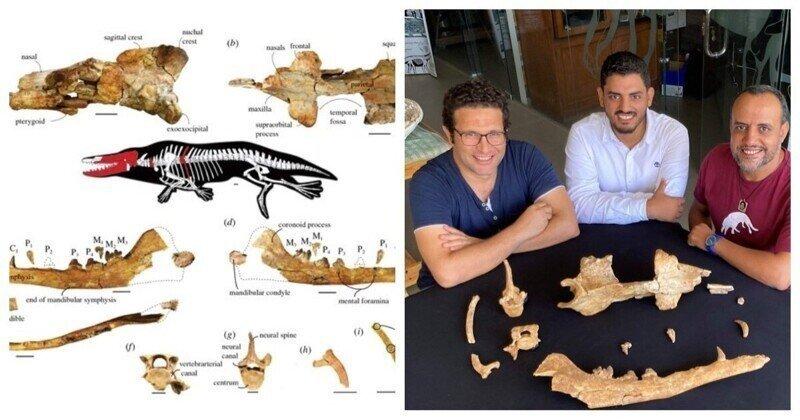 Археологи показали, как выглядел четырёхлапый кит, живший миллионы лет назад