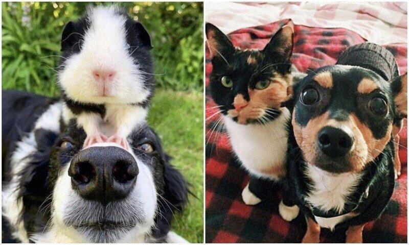 Братья от разных мам: 20+ животных, очень похожих друг на друга