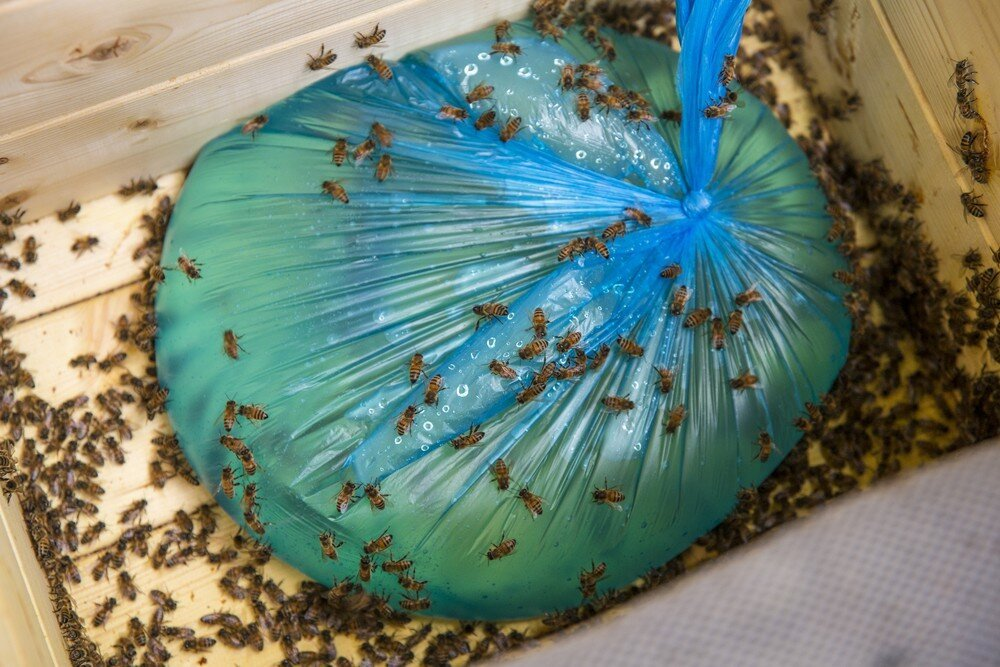 С приходом осени пчелы отказываются брать сироп: что делать?