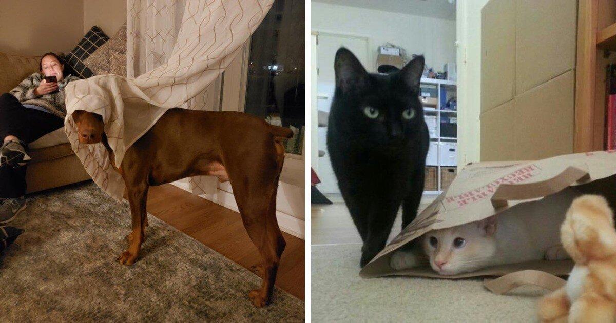 Домашние животные, которые неудачно спрятались