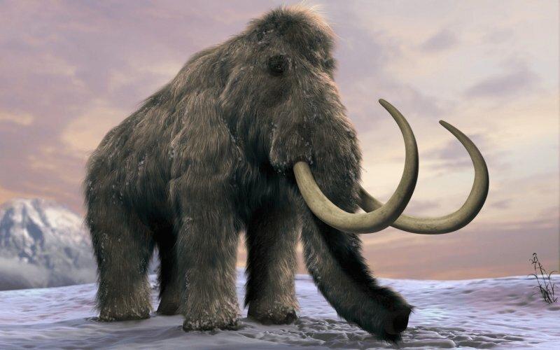 Американский стартап планирует «воскресить» мамонтов