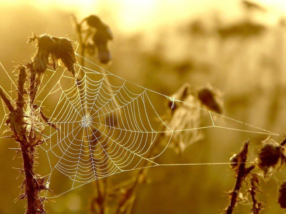 Осеннее волшебство: паутина в воздухе