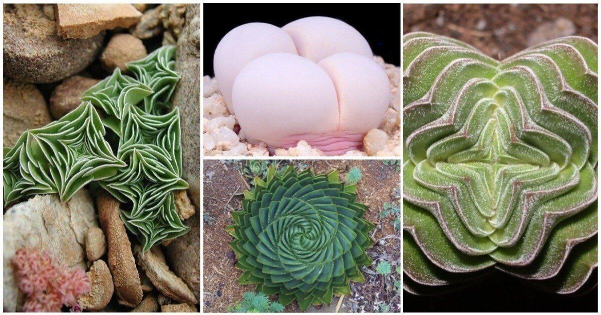 Фракталы, спирали и идеальные линии природы: 25 фото удивительной геометрии