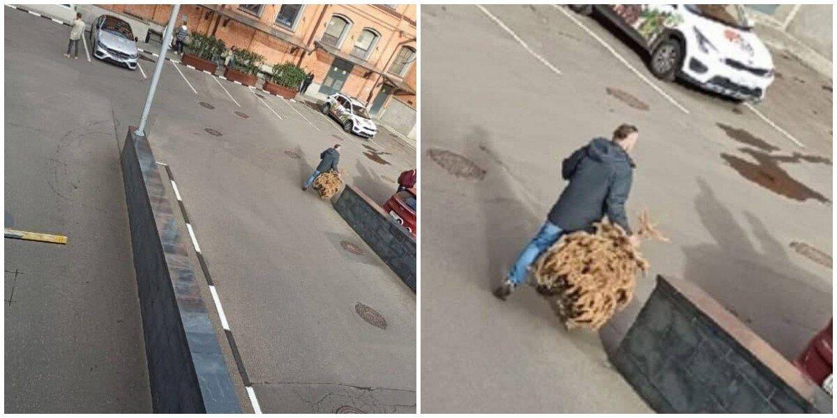 """""""Это рекорд!"""": москвич в сентябре выбросил ёлку и рассказал, сколько ей лет"""