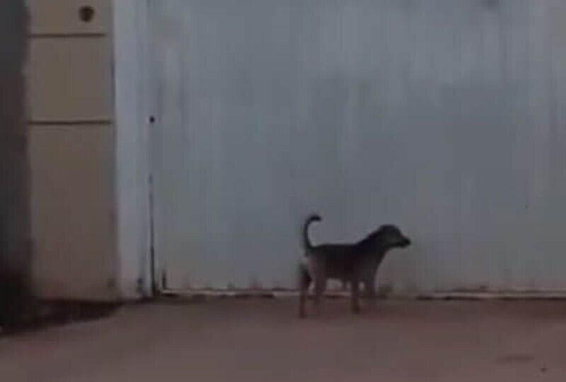 Собака, которая привыкла рассчитывать только на себя