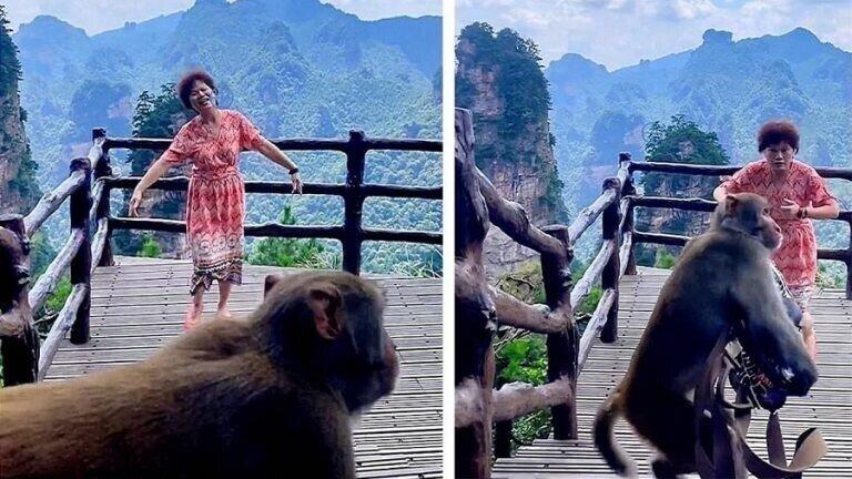 Обезьяна обокрала туристку, пока та пела и плясала