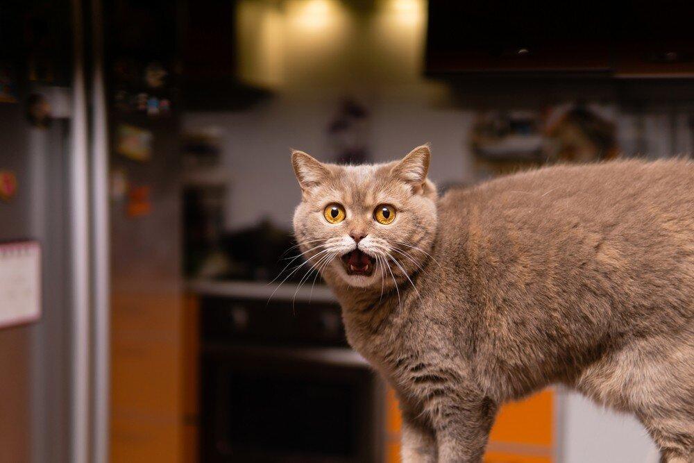 Ночные страсти: что делать с кошкой, которая не спит по ночам?
