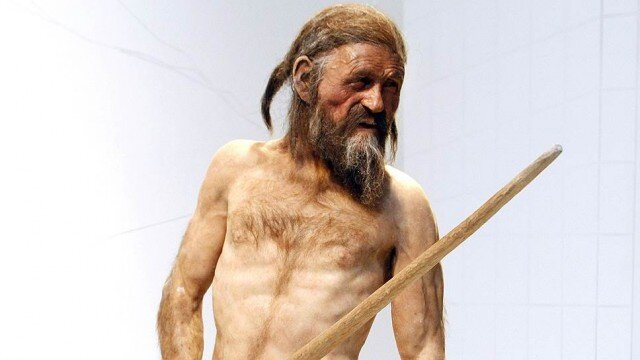 «Вегетарианцы — тупиковая ветвь человечества». На какой пище сформировался Homo sapiens