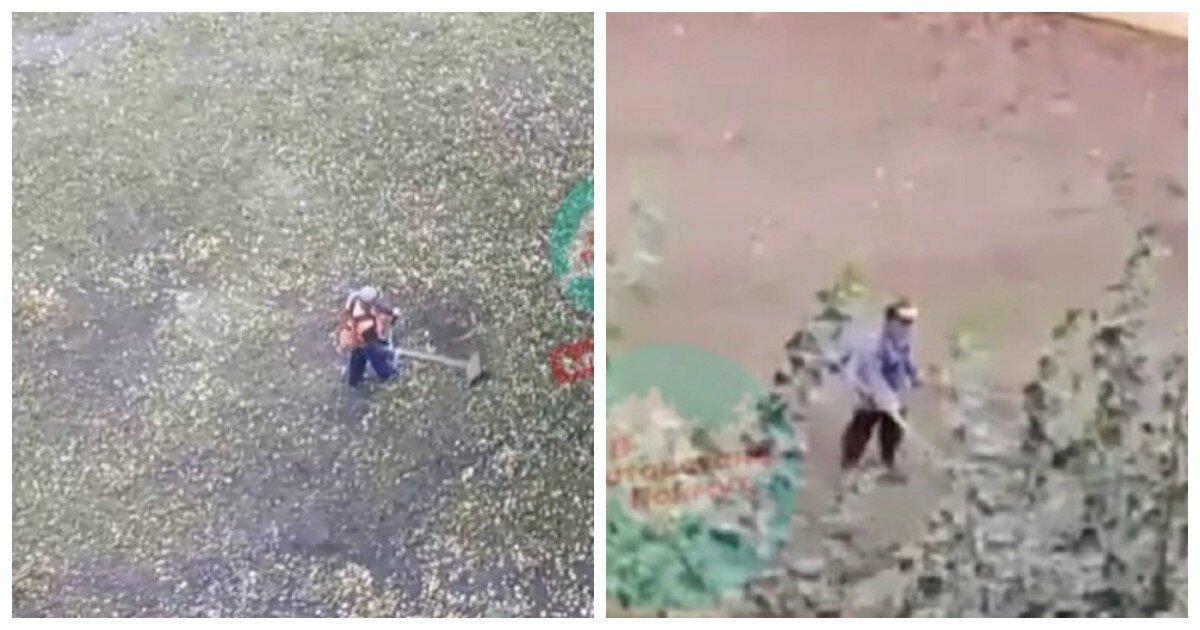 Знакомьтесь: два газонокосильщика, которых не оторвать от работы, даже если косить нечего