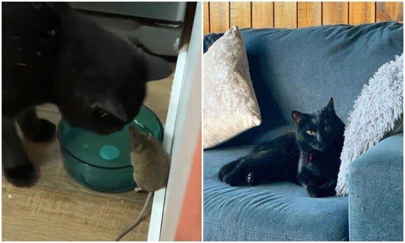 Котяра подружился с мышью, которая должна была стать его обедом