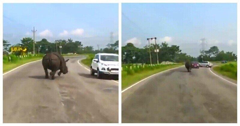 Как носорог с машинками решил поиграть