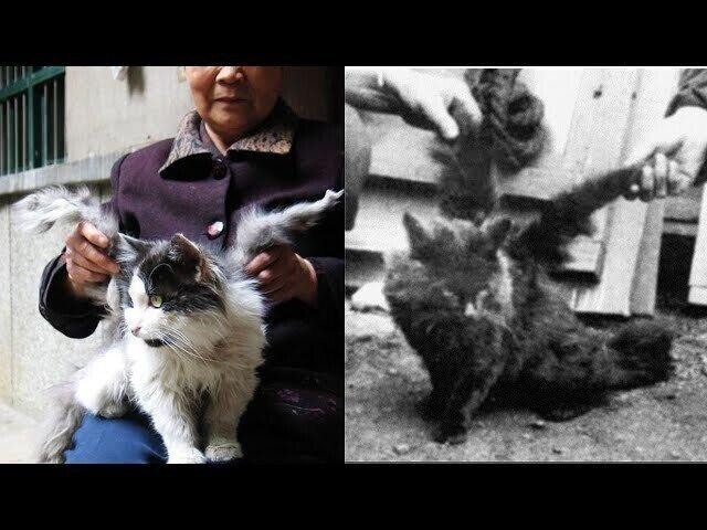 Коты с крыльями! Удивительная кошачья аномалия!