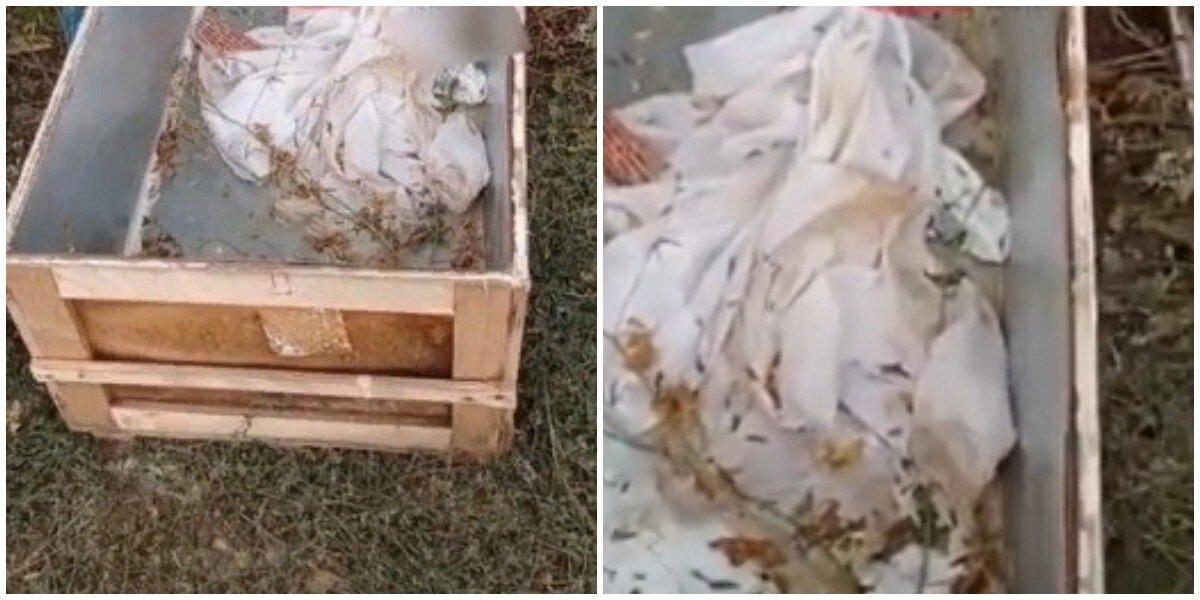 Женщина на Ставрополье нашла в лесу брошенный гроб с биркой из морга