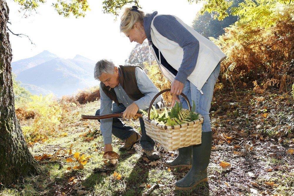 Скрытая угроза: могут ли съедобные грибы вызывать отравление?