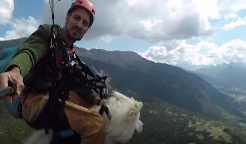 Пёс, которого забрали домой, оказался верным спутником ещё и в небесах
