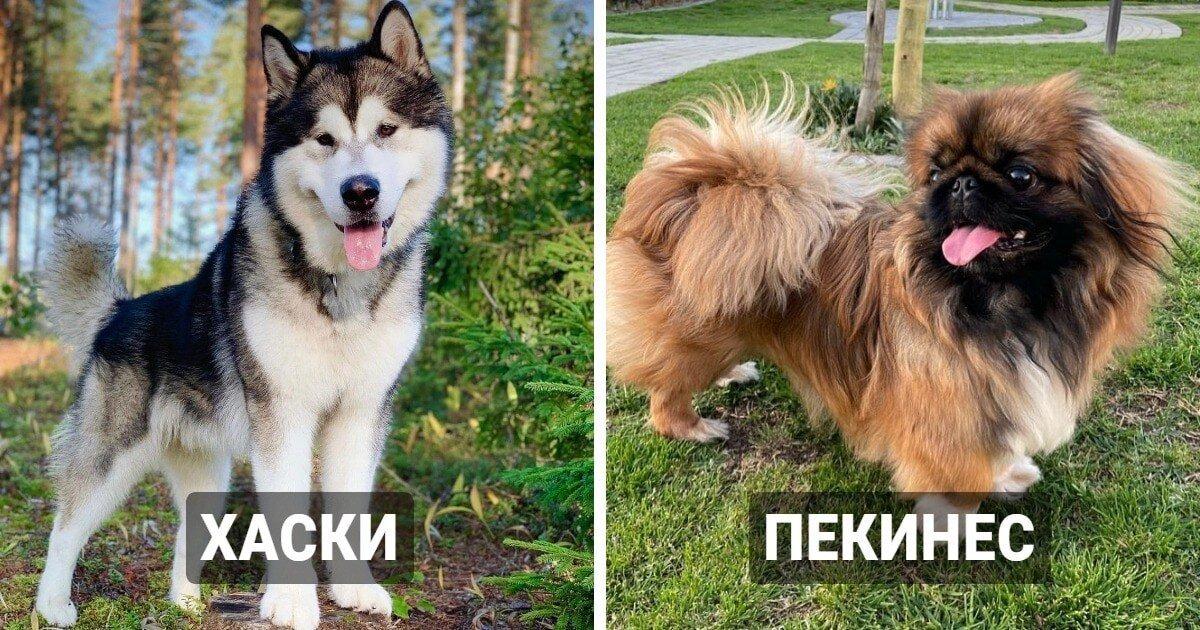 14 известных пород собак, которые оказались очень древними