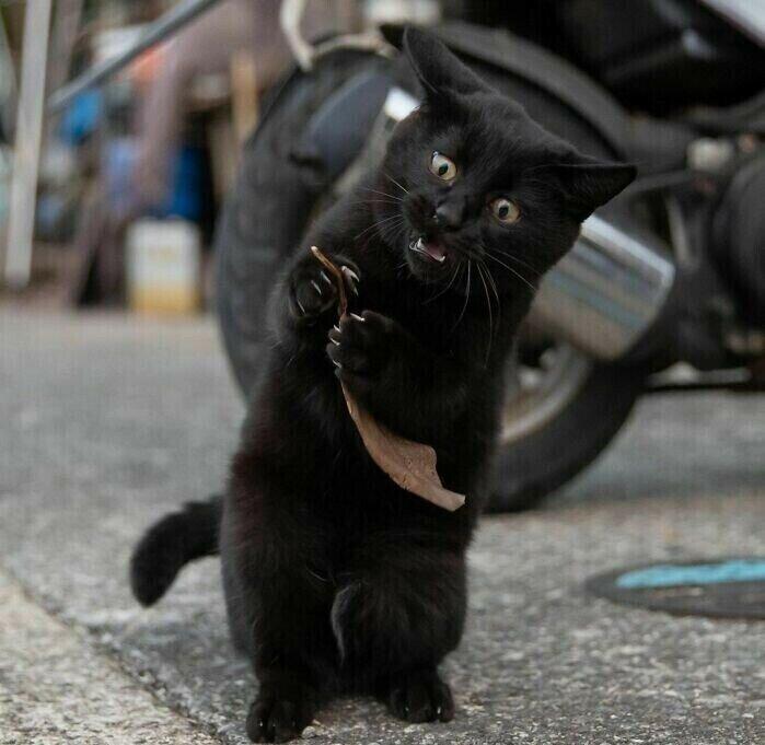 Фото самых милых уличных кошачьих поединков