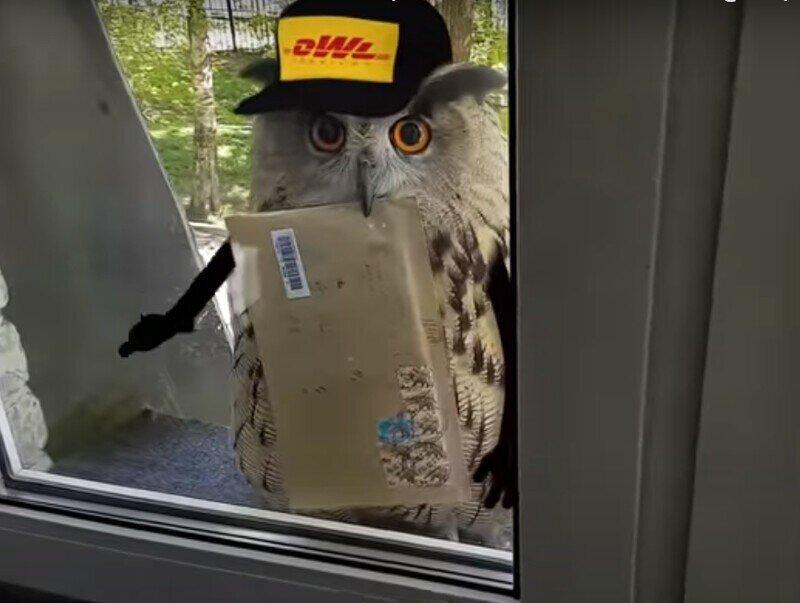 Сова-почтальон